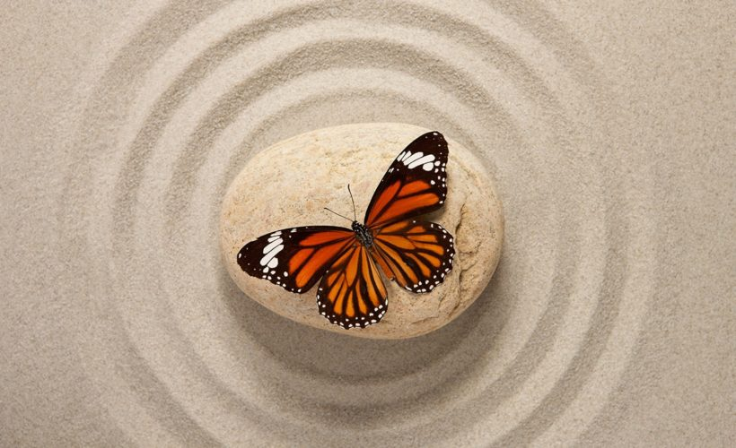 monarch butterfly on rock in zen garden